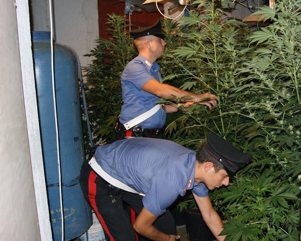Coltivava marijuana: arrestato a Mascalucia