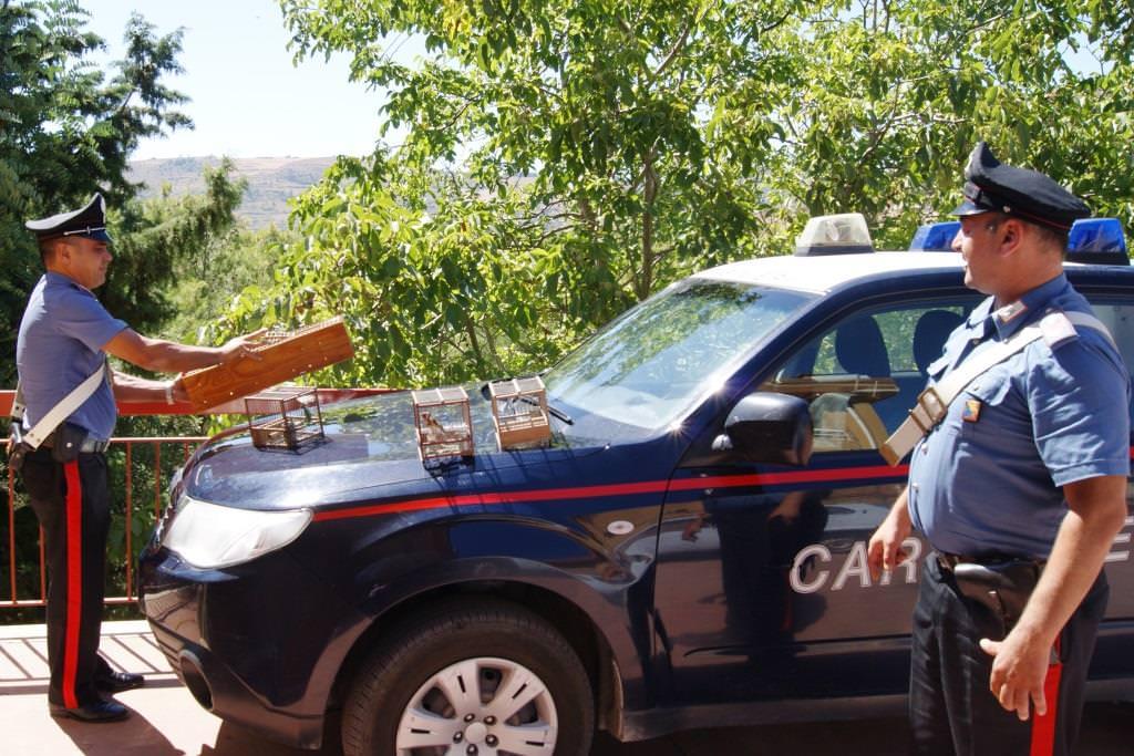 Catanese denunciato per uccellagione