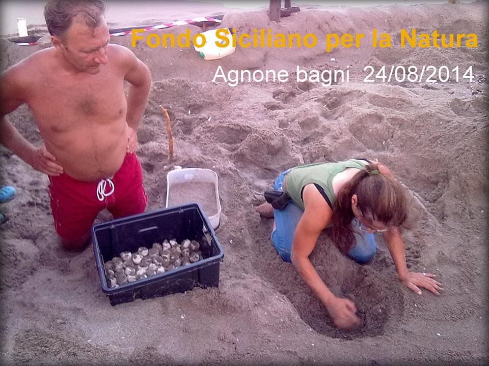Salvato nido di tartaruga ad Agnone