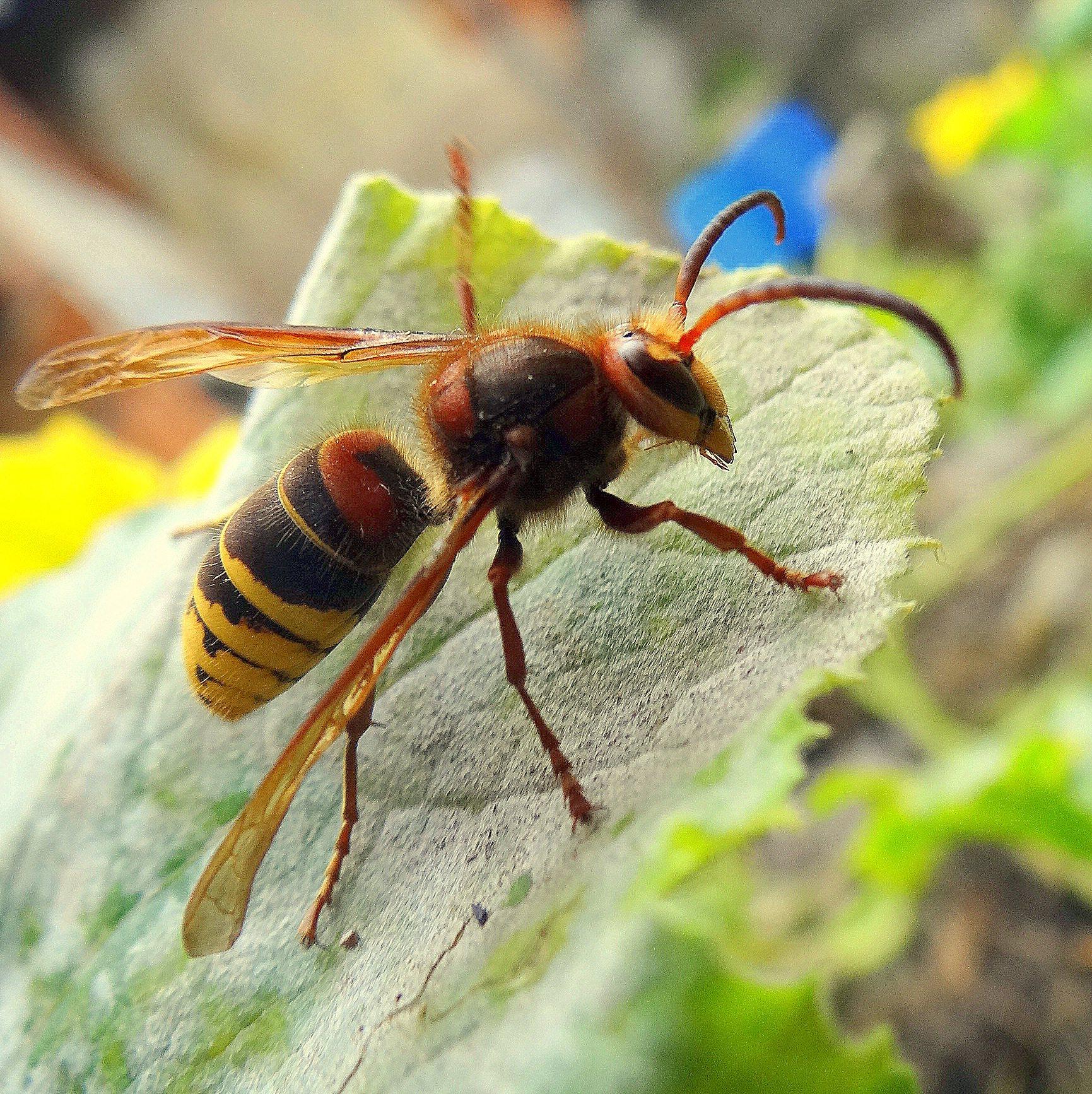 Shock: punto da insetto si accascia e muore