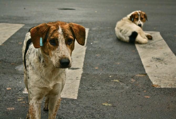 Ha tagliato le orecchie ai suoi due cani: denunciato