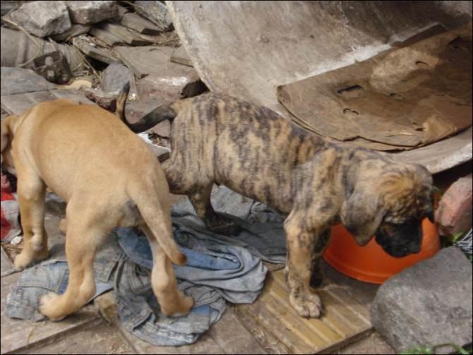 Ammassati, in gabbie strettissime e senza viveri: salvati 121 cuccioli di cane