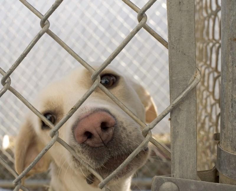 Castellammare, cani uccisi a bastonate in terreno sequestrato alla mafia