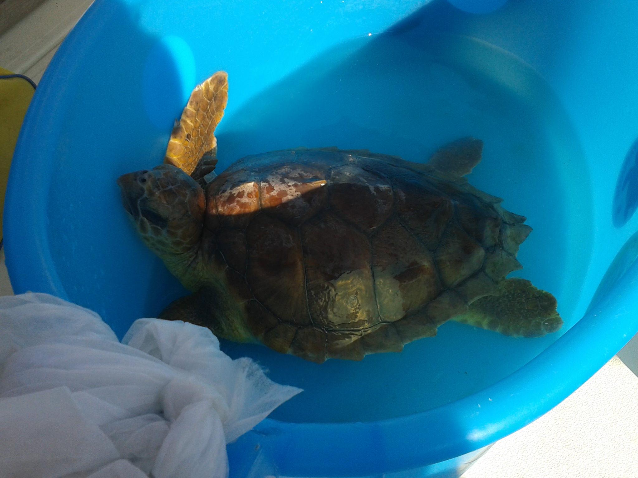 Salvate due tartarughe marine nell'Area marina protetta delle Isole Egadi