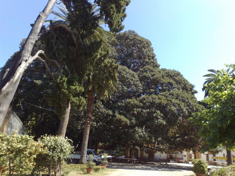 Palermo, riaprono giardini comunali con ingresso per fasce orarie: l'elenco delle ville visitabili
