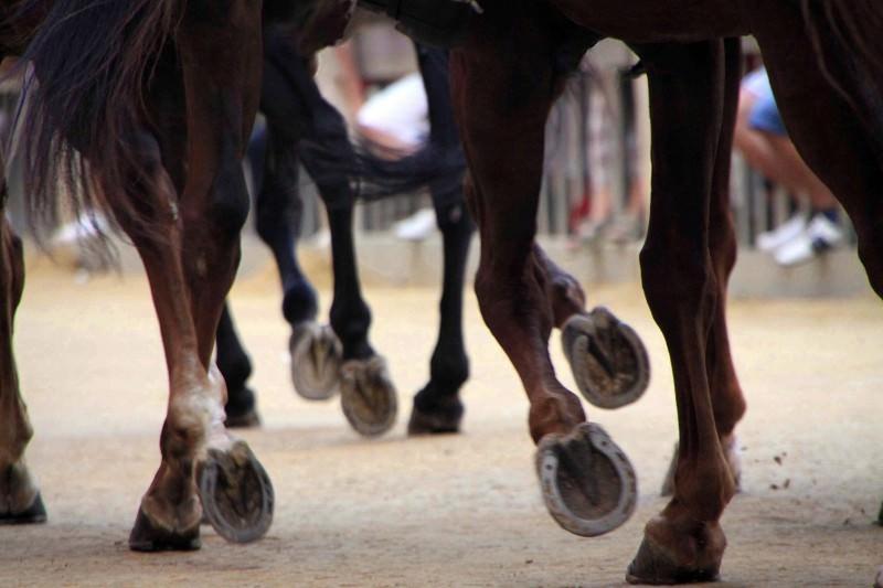 Macellano clandestinamente e barbaramente un cavallo, arrestate quattro persone