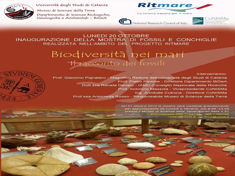 Catania, la biodiversità marina attraverso i fossili