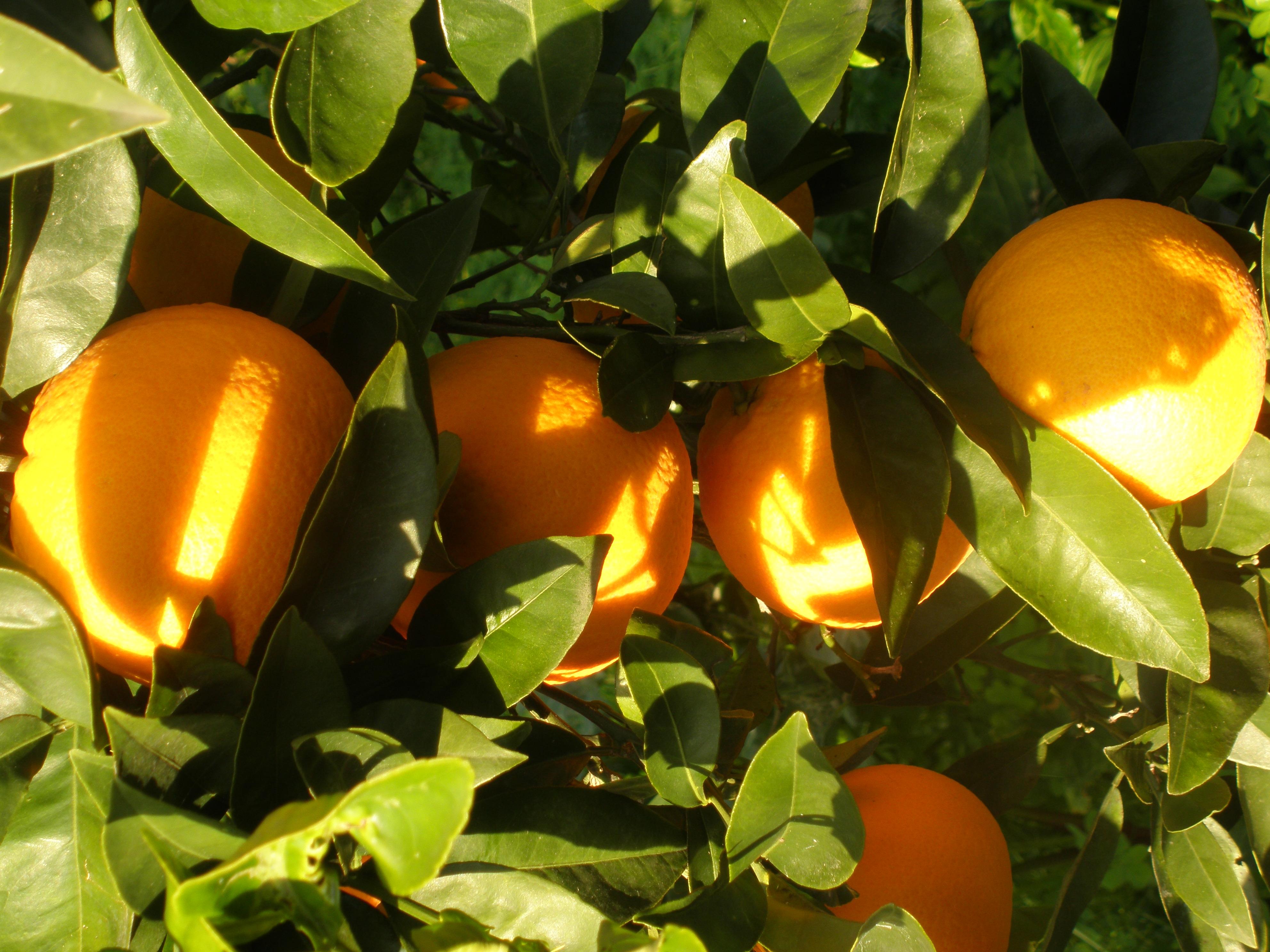 Più frutta nelle bibite, plauso anche di Coldiretti Catania