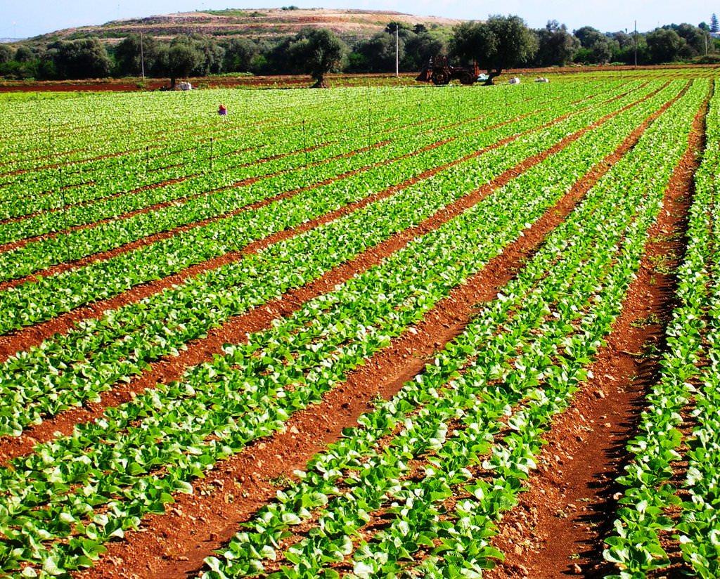 Catania, Tar annulla bando da 320 milioni per coltivazioni ecosostenibili