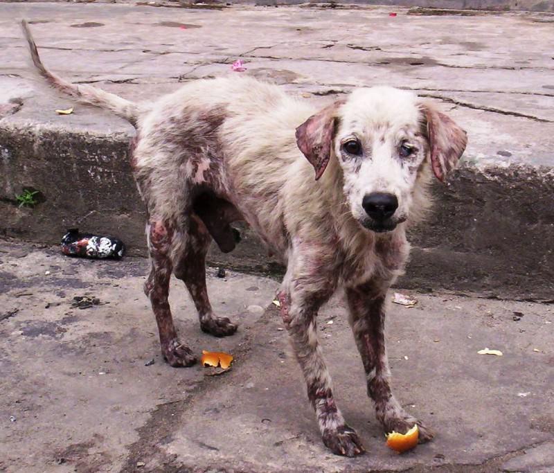 Legato a un palo e lasciato senza acqua né cibo, cane salvato da un passante