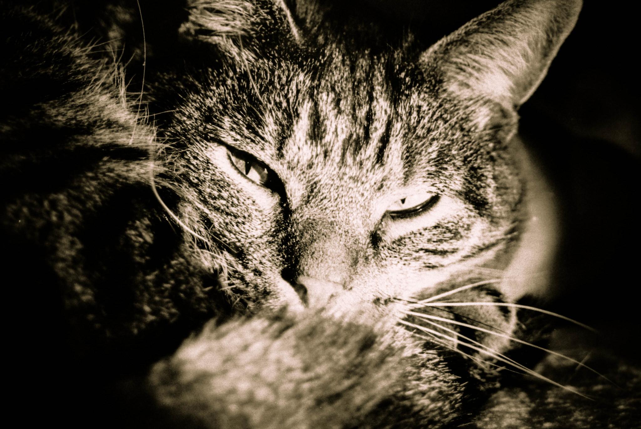 Festa del gatto: giro d'affari di oltre 2 miliardi di euro
