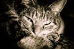 Miagolii sofferenti in via Vecchia Ognina, gatto rimane intrappolato in un cancello: vigili del fuoco sul posto