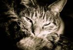 Spara a un gatto con una carabina ad aria compresa: 50enne denunciato per maltrattamento di animali
