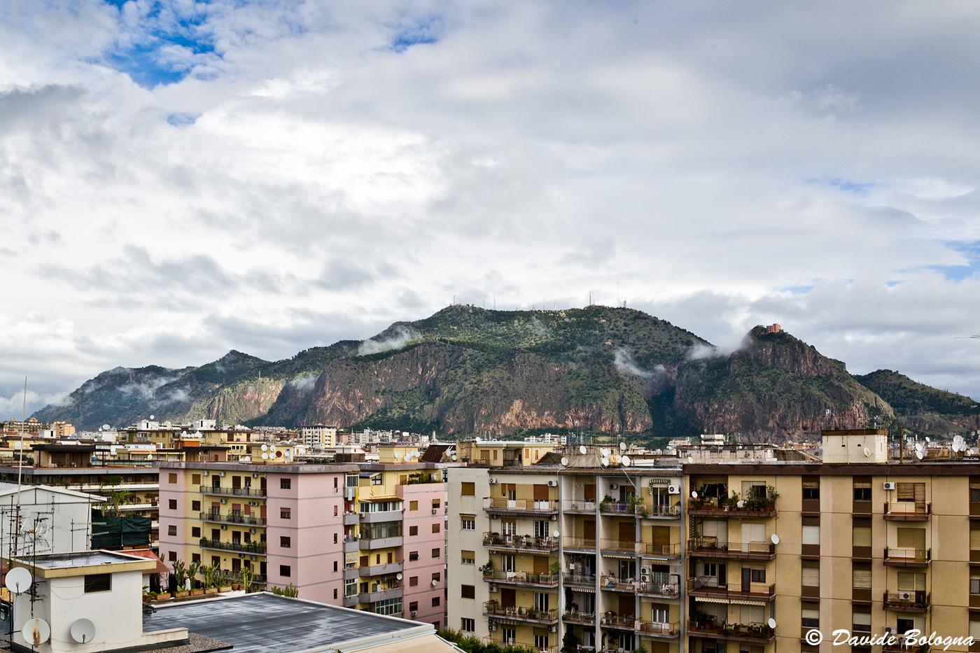 Palermo, cinghiali alle falde di Monte Pellegrino