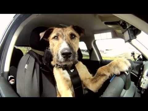 Porter: il primo cane al mondo che guida