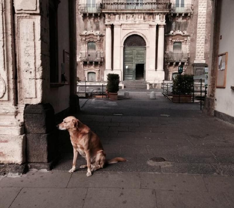 """Catania: """"Melo"""" il cane mascotte dei Benedettini"""