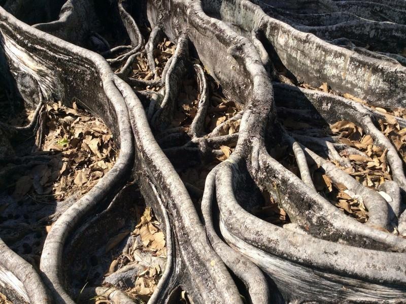 Siracusa, radici ostruiscono tubature: esplode tombino, liquami in mare