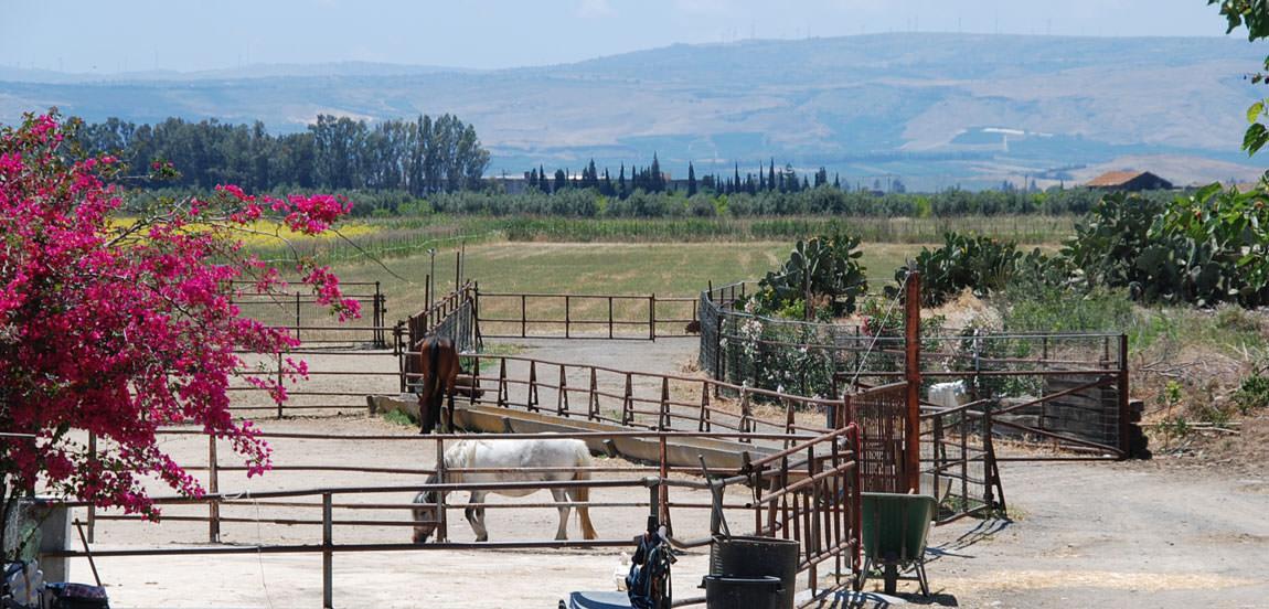 """Una passeggiata a cavallo tra i caseggiati di """"Fattoria Jannarella"""""""