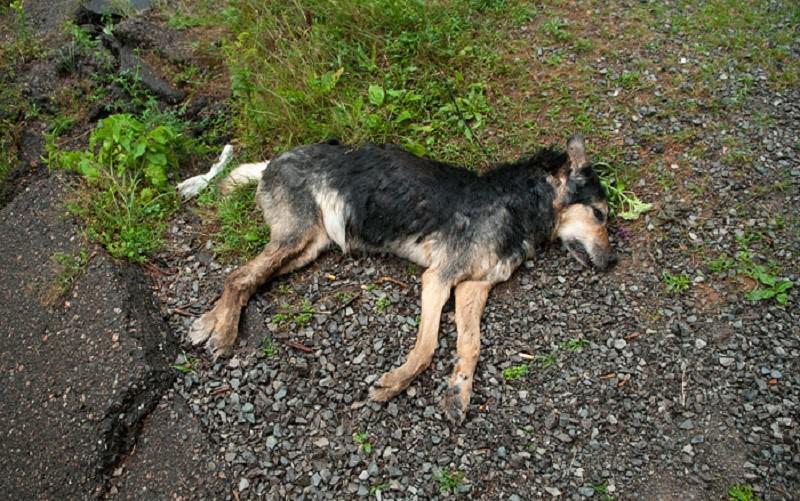 """Siracusa, strage di cani che """"non facevano male a nessuno"""""""