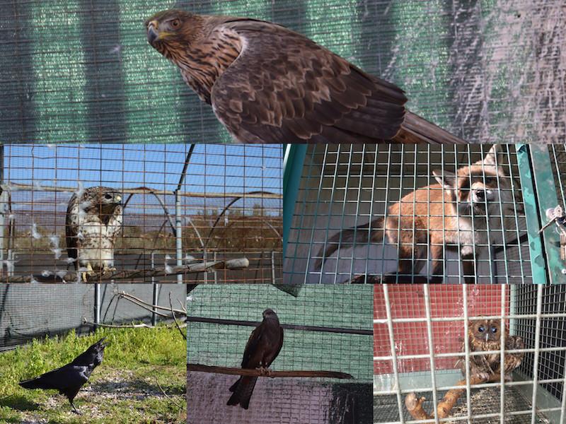 In Sicilia a rischio chiusura i centri recupero della fauna selvatica