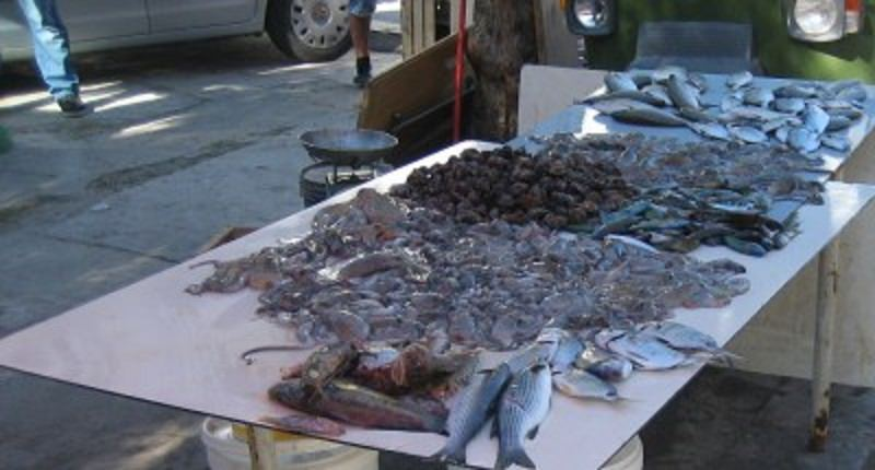 Controlli a Borgo Nuovo, sequestrati 100 chili di pesce