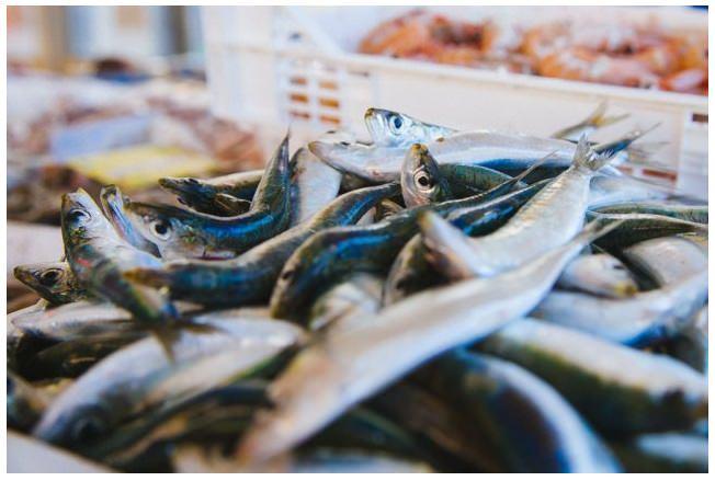 Vendita illegale di prodotti ittici, nel mirino venditori ambulanti: sequestrati oltre 10 chili di pesce