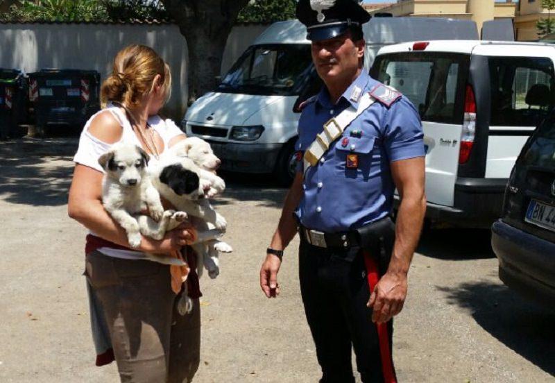 Palermo, salvati tre cuccioli abbandonati sulla strada