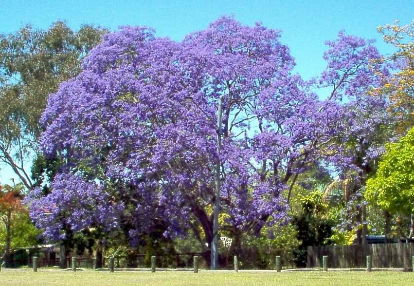 """Mascalucia, """"Dove fiorisce la Jacaranda"""": nuova edizione dell'esposizione floreale"""