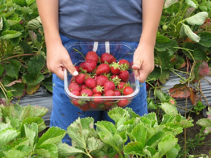 Colpo al caporalato: chiuse due aziende agricole a Maletto