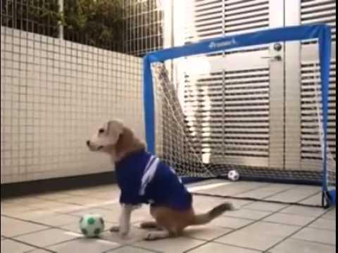 Cane para rigori: perfetto per il fantacalcio! VIDEO