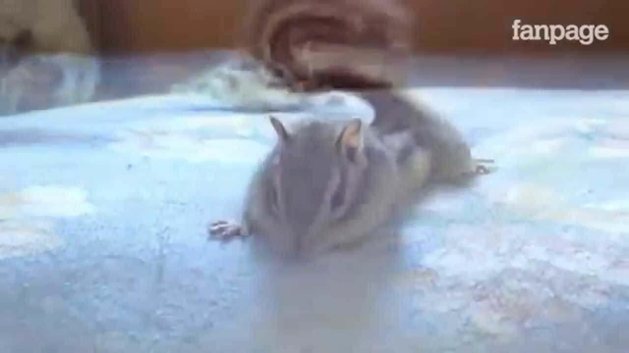 Come si sveglia uno scoiattolo? VIDEO DOLCISSIMO