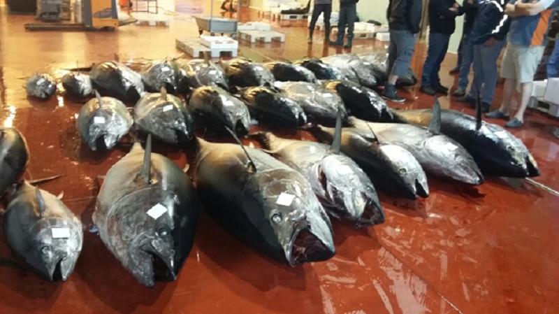 Più di 7 tonnellate di tonno rosso sequestrate ad alcuni pescherecci della marineria catanese
