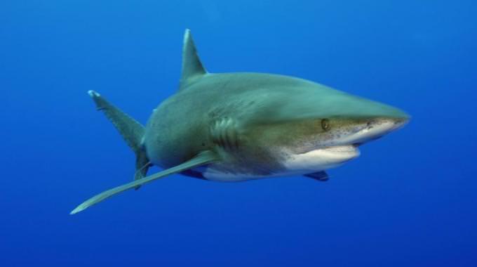 Rinvenute ad Avola le carcasse di uno squalo e di una murena