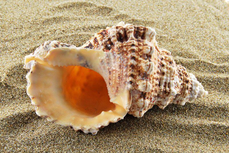 Perchè nelle conchiglie si sente il mare?