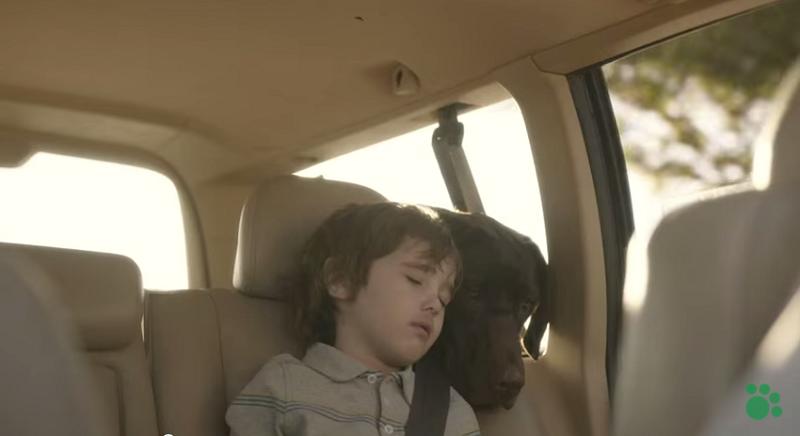 La vita insieme di un bambino e il suo cucciolo: guarda il video