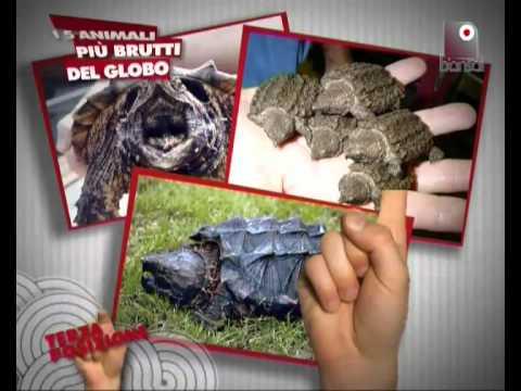 Animali mostruosi: ecco una VIDEO classifica