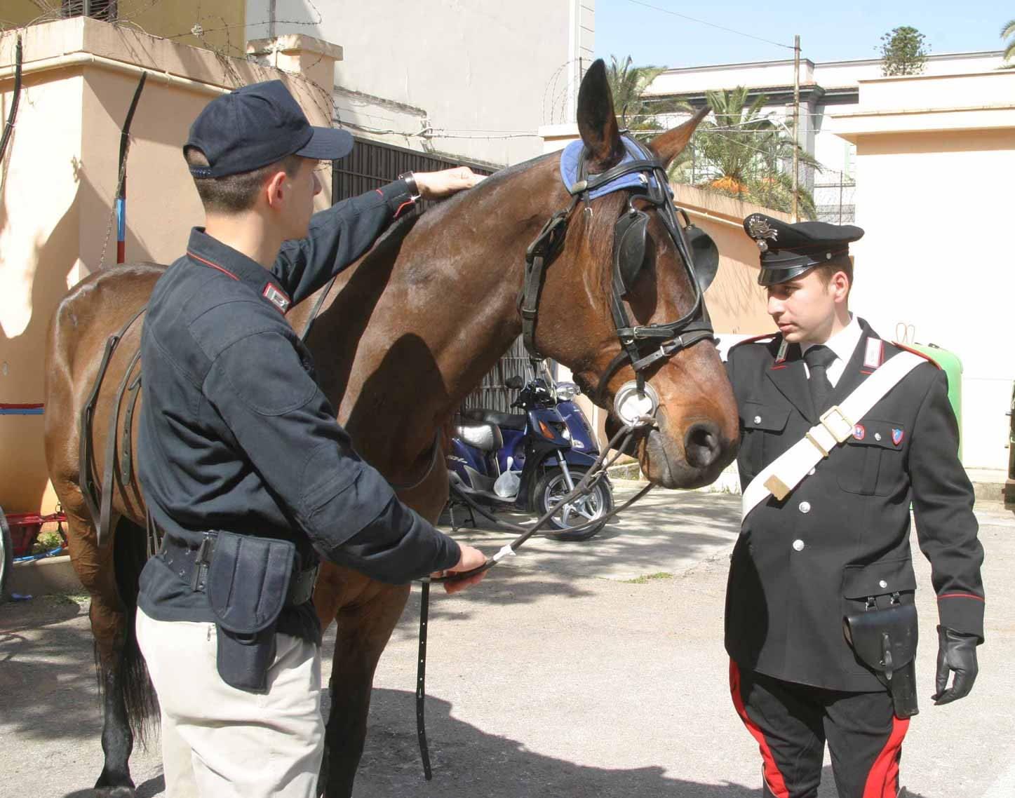 Palermo, corse clandestine di cavalli: denunciati due uomini