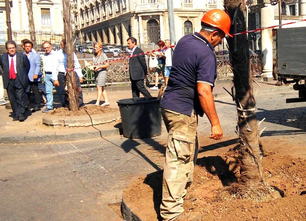 Catania, 25 nuove palme in piazza Stesicoro