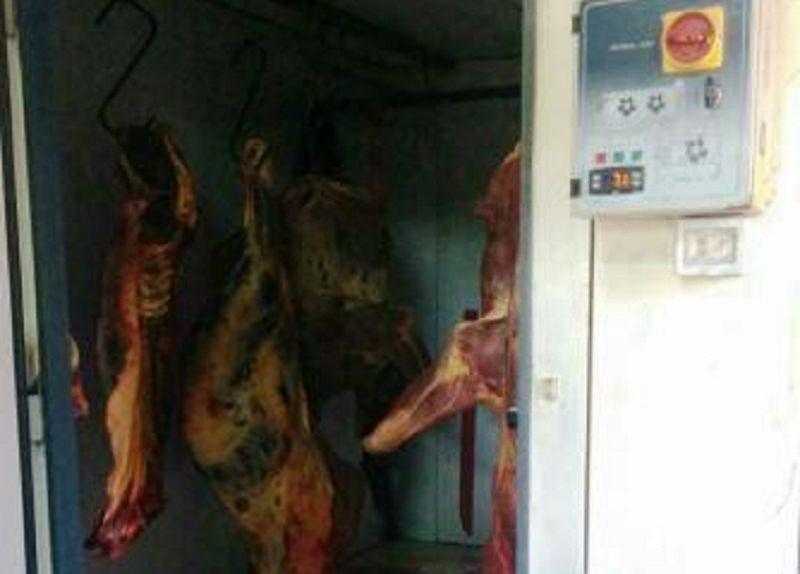 Scoperto macello clandestino di cavalli: denunciato il proprietario.