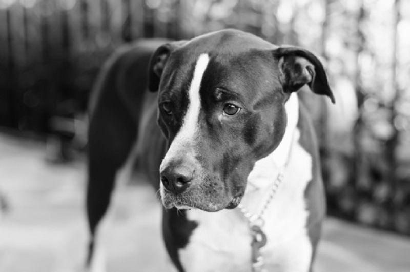 Abbandonare un animale per strada significa condannarlo a morte