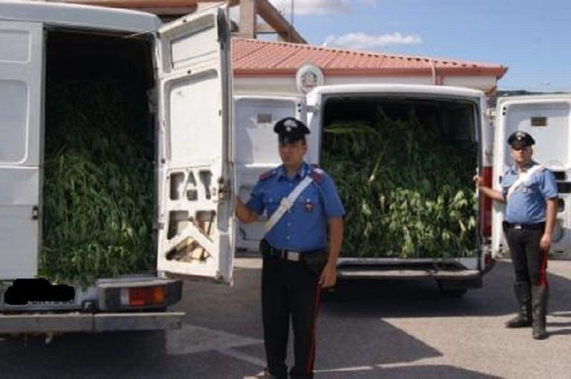 Scordia, trovata e sequestrata marijuana per un milione di euro