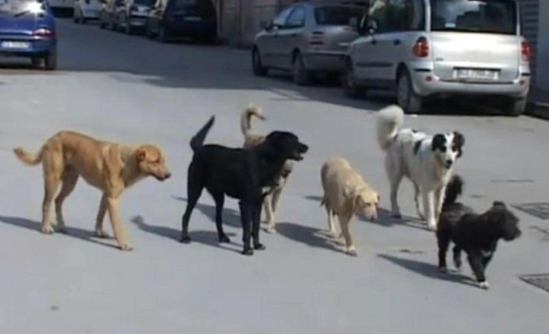 """Cani """"vaganti"""": sopprimerli o prendersene cura?"""