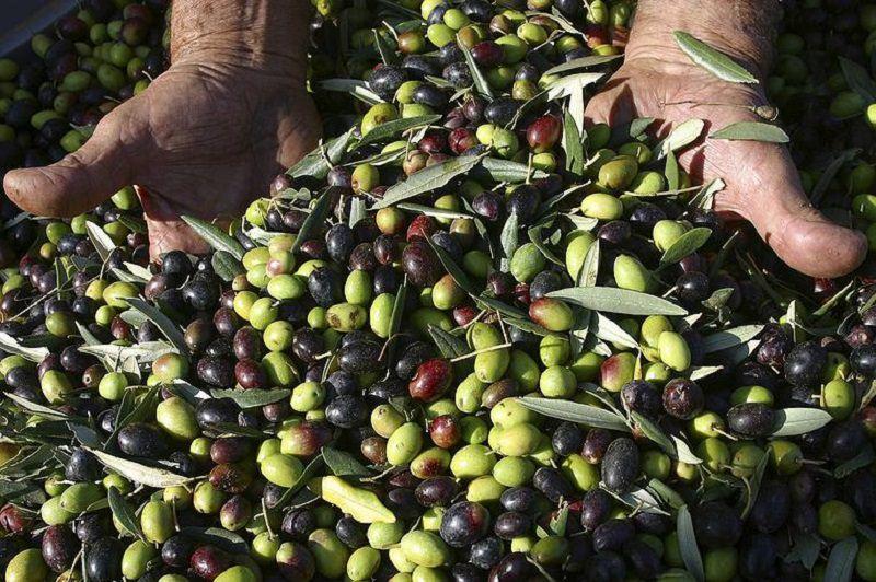 La ricchezza della tradizione olearia siciliana all'ombra del Mongibello