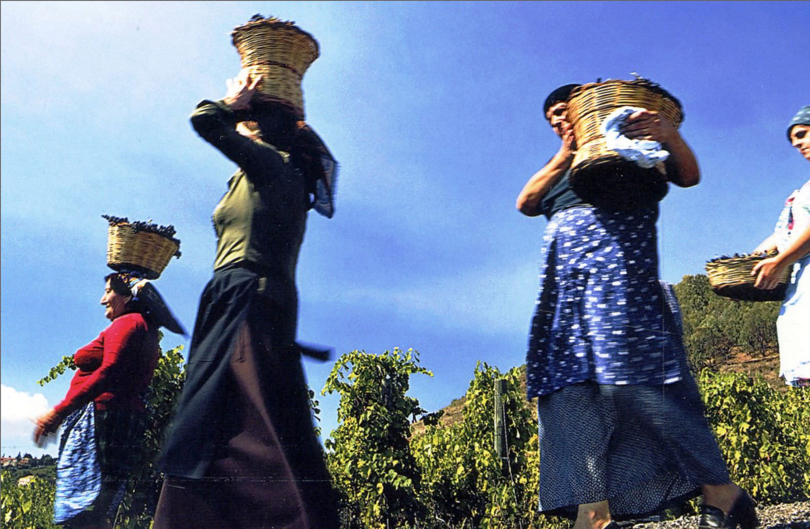 Terra dell'Etna, vendemmia e vino…d'annata !