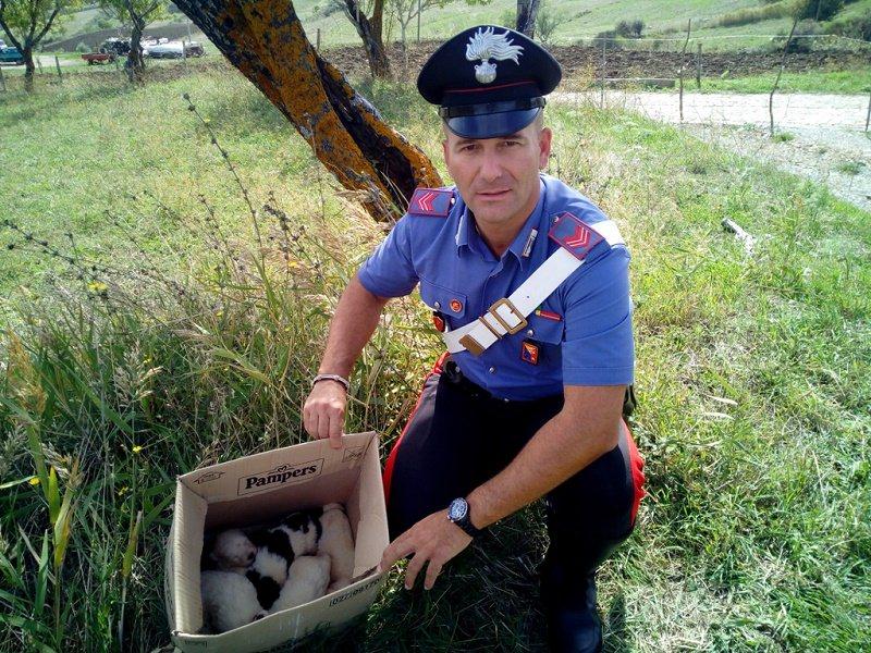 Cucciolata di cani meticci salvata dai carabinieri