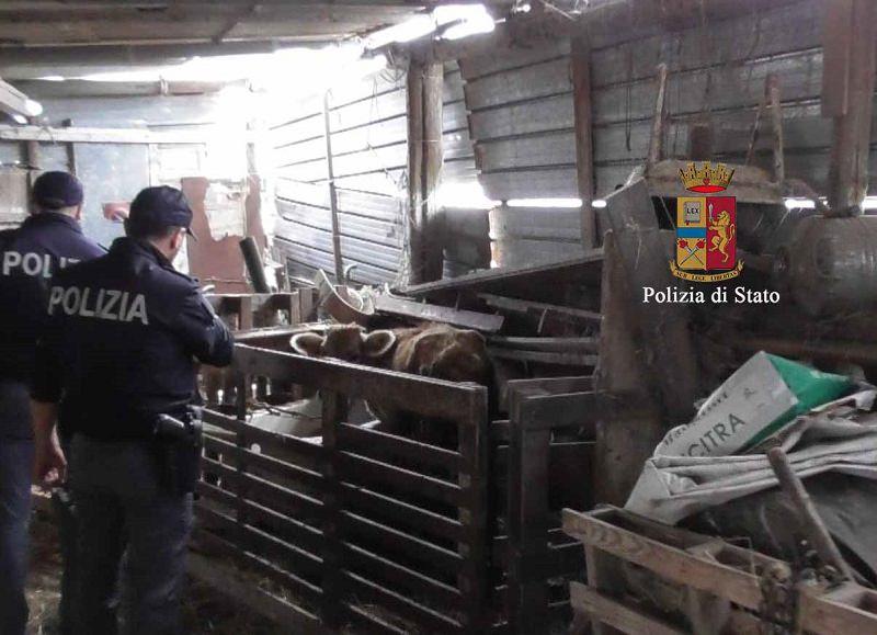 """Sequestrato allevamento di animali """"fantasma"""": il proprietario dichiara il falso ai veterinari"""