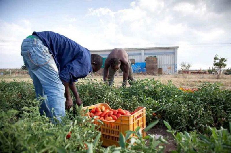 """Caporalato, sindacati chiedono anche per la Sicilia legge ad hoc: """"Bonificare le paludi del lavoro nero"""""""