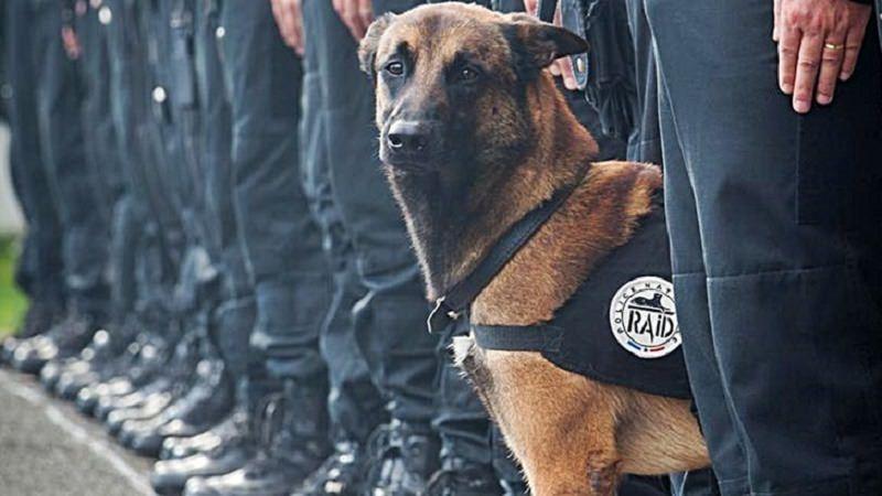 Strage di Parigi: AIDAA proclama giornata di lutto per Diesel, il cane eroe