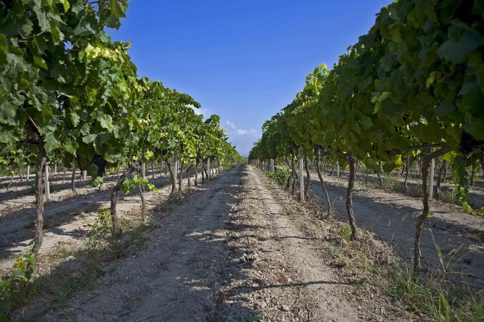Perdersi tra le inebrianti note olfattive di un buon vino…