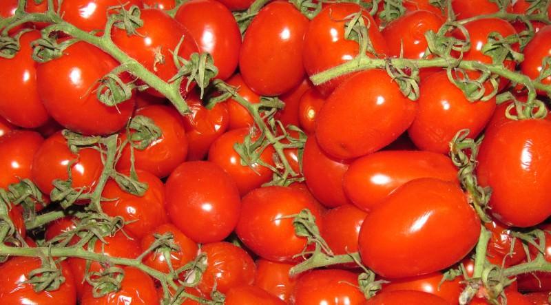 Il crollo del pomodoro siciliano, bene da tutelare